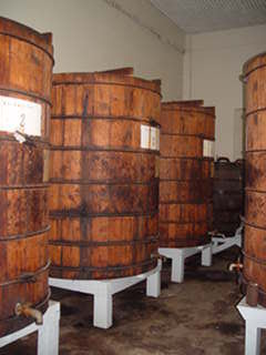 Oak Maceration